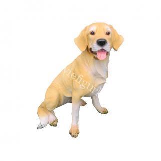 Собака Лабрадор сидит