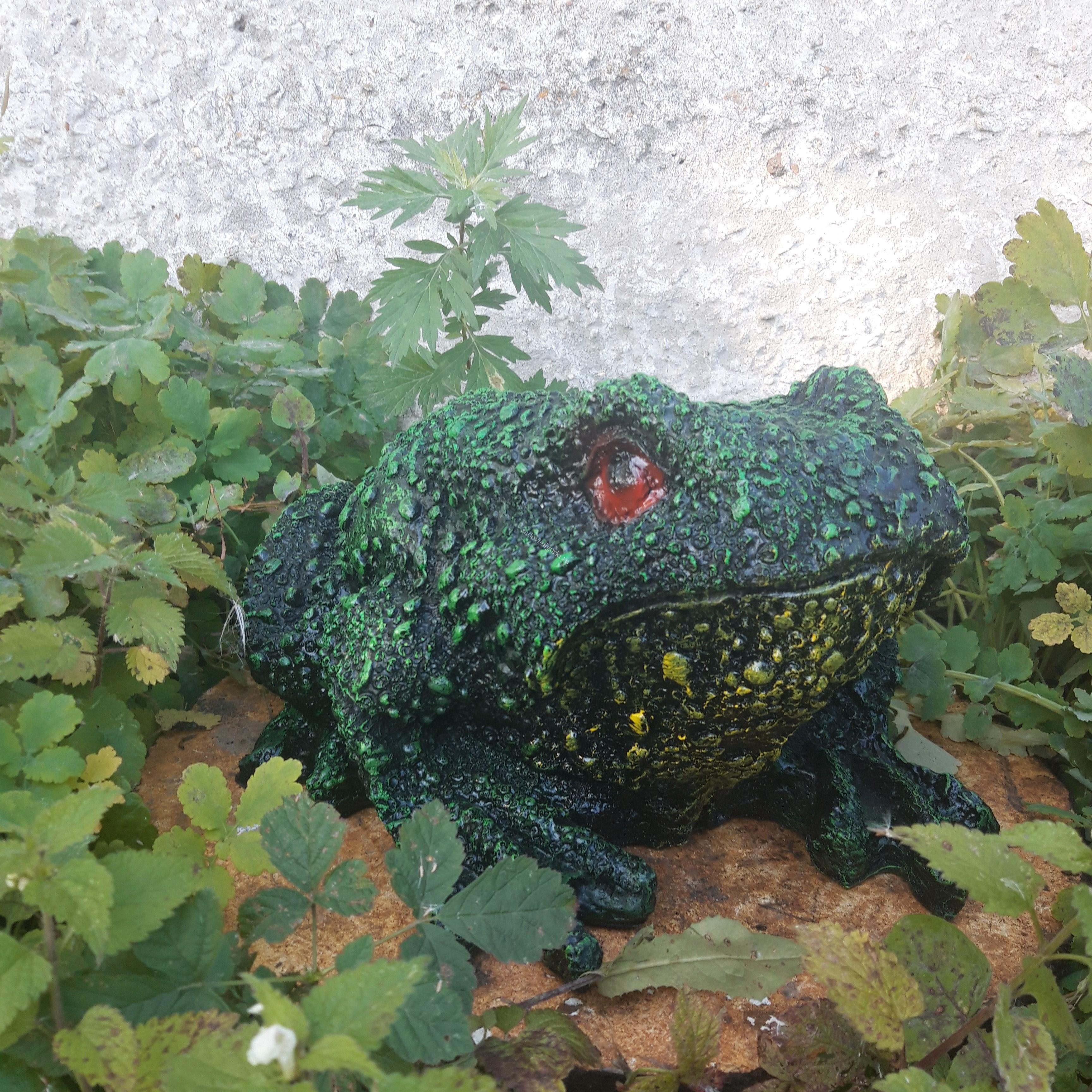 Жаба большая